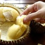 Durian, Fakta dan Mitos!